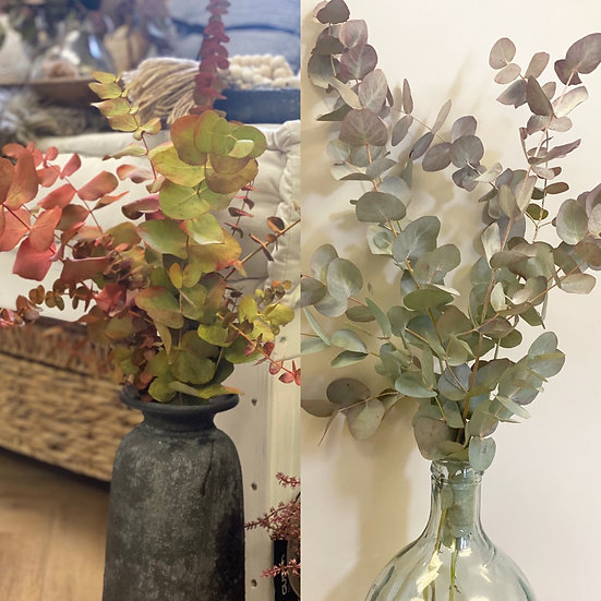 Small/large bunches of autumnal eucalyptus