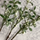 Thumbnail: Snowberry single stem