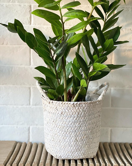 Small white washed seagrass basket