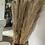 Thumbnail: Natural drier cortaderia stem