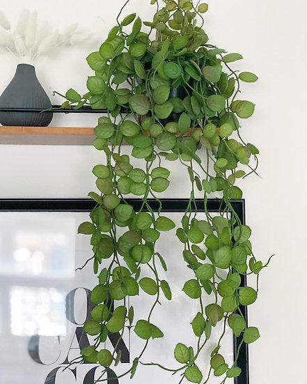 Ceropegi faux hanging plant
