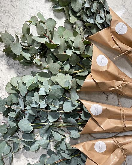 One bunch of dried eucalyptus