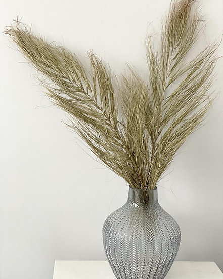 A pair of 65cm tall Date Jhat palm stems