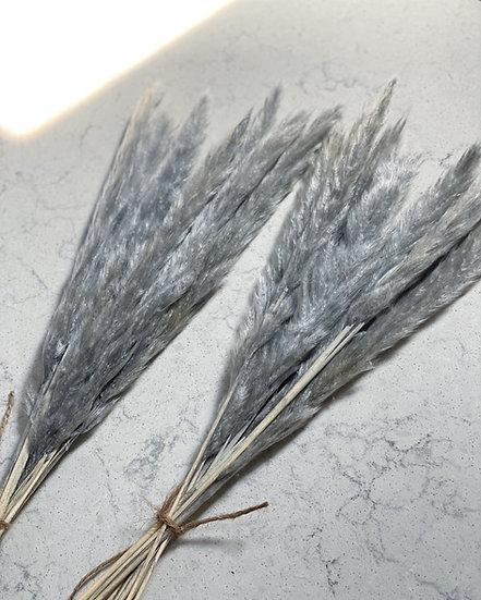Grey thin pampas stems bunch