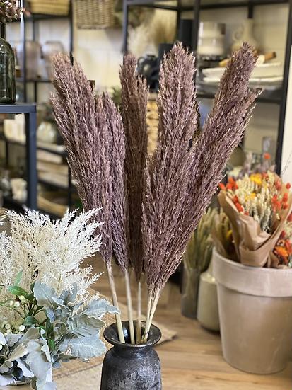 Mauve brown pampas stem