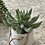 Thumbnail: Faux hanging potted succulent