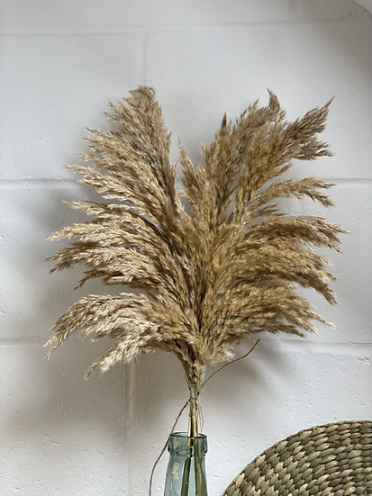 Bunch of pampas