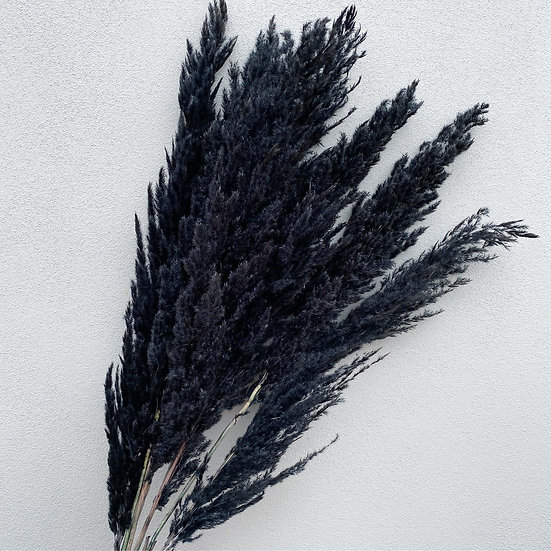 Black pampas stem
