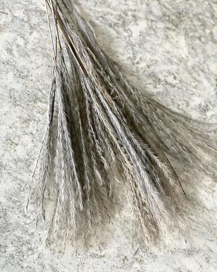 Bunch of grey stipa feather stems