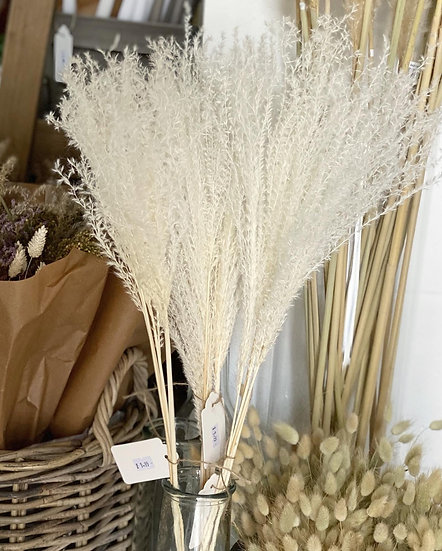 Bleached miscanthus grass bunch