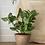 Thumbnail: Faux large lavender, mint or basil plants