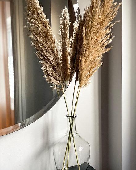 Mini oat coloured fluffy pampas