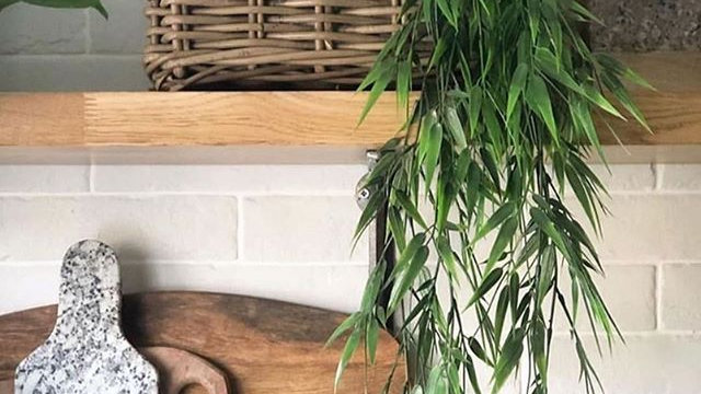 Trailing faux bamboo (thicker) 75cm