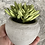 Thumbnail: Faux succulent in a concrete pot
