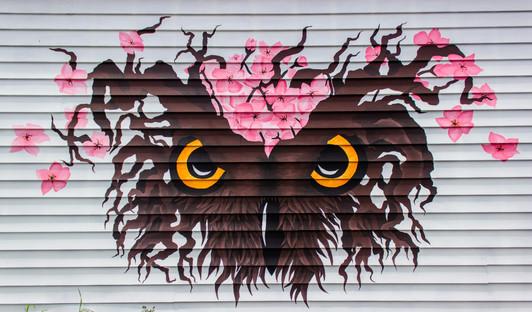 Owl Cherry Blossom Mural
