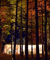 Forest uplighting Flagstaff wedding DJ