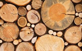 Preços de madeiras têm altas expressivas no Pará em abril de 2019