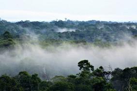 Projeto acaba com a reserva florestal obrigatória em propriedades rurais