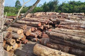 Semas faz a maior apreensão de madeira do ano em ação conjunta com órgãos federais
