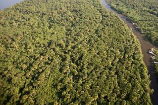 Semas destaca ações que fazem do Pará exemplo na preservação ambiental