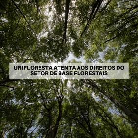 Unifloresta atenta aos direitos do setor de base florestais
