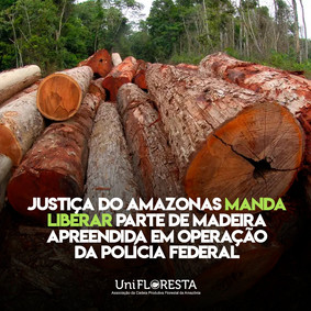 Juíza manda PF devolver madeira apreendida na divisa do Amazonas com o Pará.