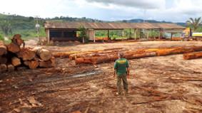 Ibama apreende 2 mil m³ de madeira ilegal no PA