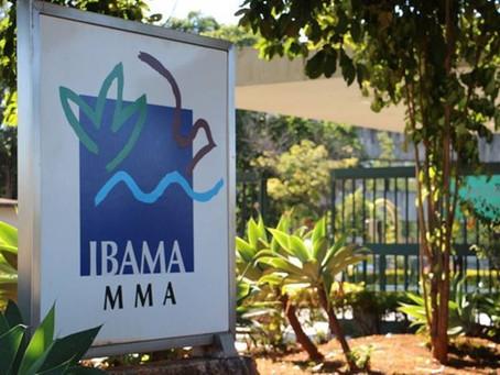 Ibama condenado a indenizar empresa por apreensão e doação ilegal de produtos florestais