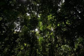 """Brasil pode liderar """"nova economia florestal"""" com reflorestamento"""