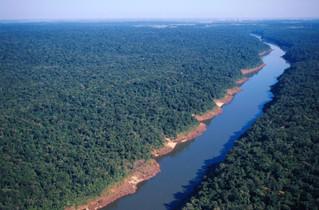O futuro das florestas e da agricultura até 2050