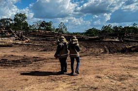 Semas fecha 10 serrarias clandestinas em operação conjunta com órgãos federais