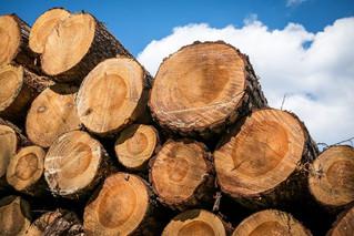 Setor florestal atinge US$ 7,8 bilhões em exportações