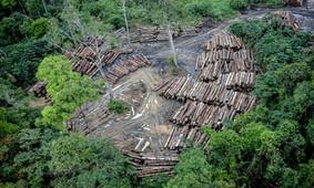 Desmatamento na Amazônia cresce e 602  cientistas europeus se manifestam
