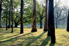 9 cidades brasileiras engajadas na conservação das florestas