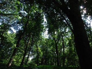 Governo quer mais privados a investir na floresta