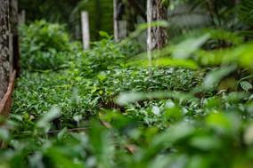 Não adianta fazer restauração florestal e  não proteger mata nativa