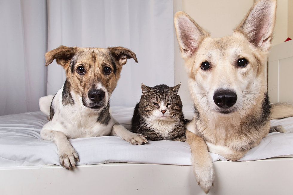 dog and cat sitting Westerville | Scales
