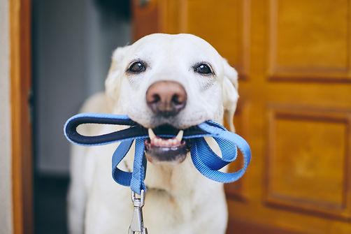 dog with leash | dog walker westerville