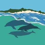 Dolphin1-01.png
