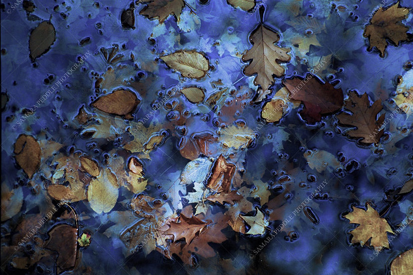 Leaves in Blue