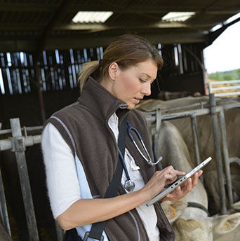 bigstock-veterinarian-checking-on-herd--