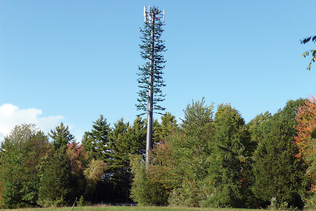 Zoning Board Okays Fake Tree Design for Belle Mead Cell Tower