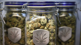 Marijuana in Montgomery—What Does the New Law Mean