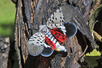 Lanternfly Infestations Reported in Montgomery Township and Rocky Hill
