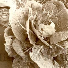Hastings - Man holding large cabbage.