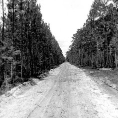 Forest road project by the CCC. (1934)
