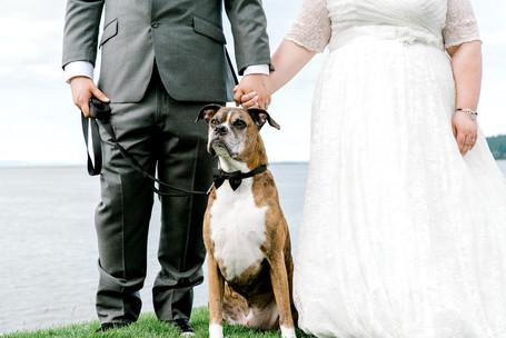 dog in wedding photo