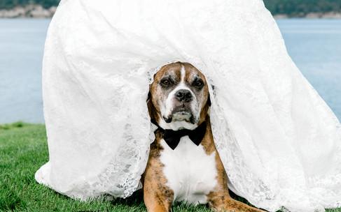 dog under wedding dress