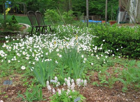 Plants Create Community