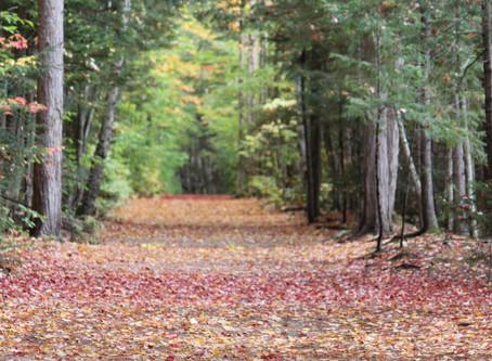 Mindful Meditation and Homeostasis